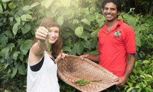 Sameera und Gründerin Laura bei der Pfeffer-Ernte auf Sri Lanka